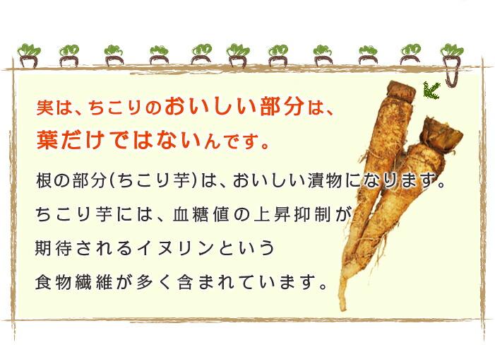 根の部分 ちこり芋