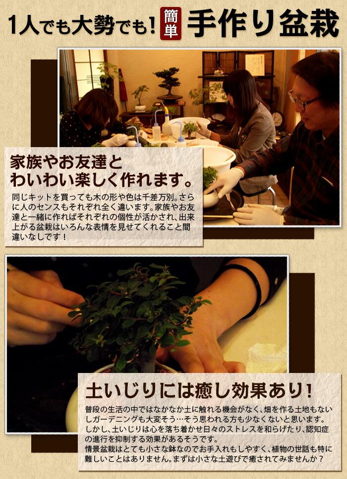 みんなでワイワイ楽しく手作り盆栽