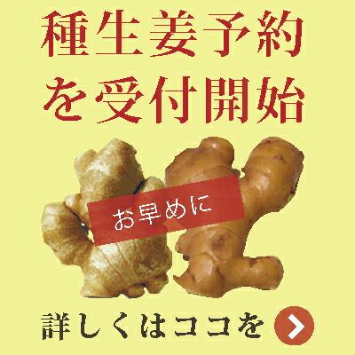 """""""種生姜予約開始"""""""