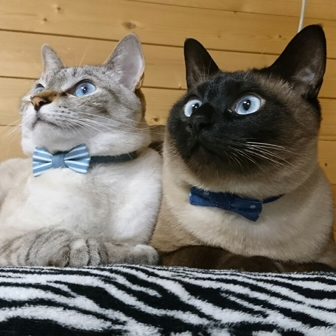 猫 首輪 リボン デニム セーフティ猫首輪