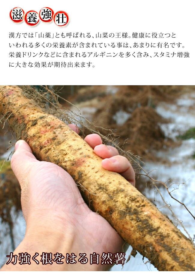 漢方では山薬と呼ばれ、栄養ドリンクに含まれるアルギニンを多く含む、山の幸
