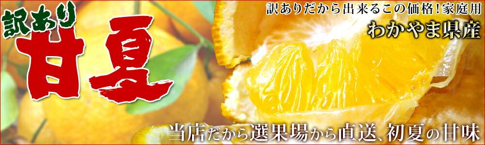 2017年度、和歌山県産「甘夏」あまなつ、産地直送