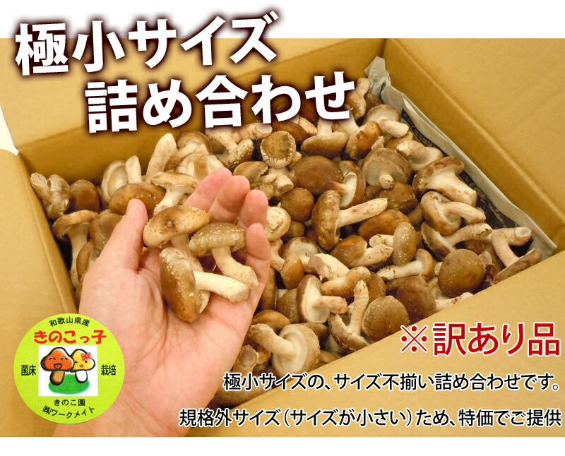 小さいけれど、味は最高!国産の生椎茸です
