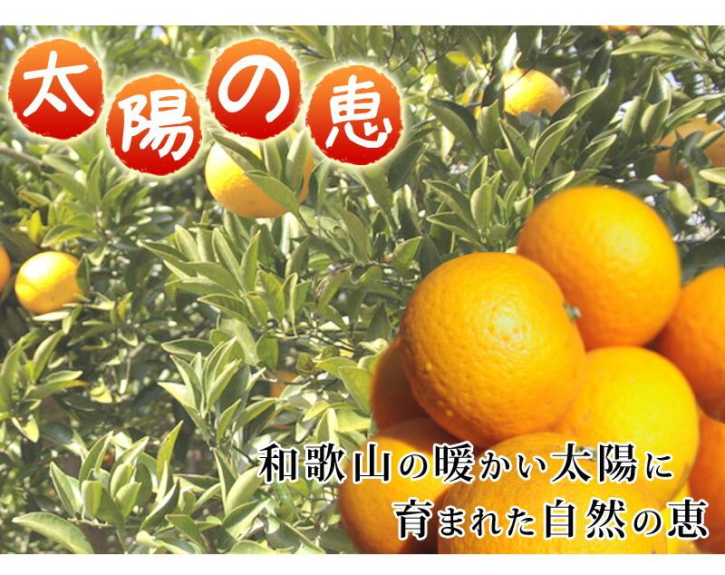 太陽の恵フルーツ、和歌山の温暖な気候に育まれた甘夏