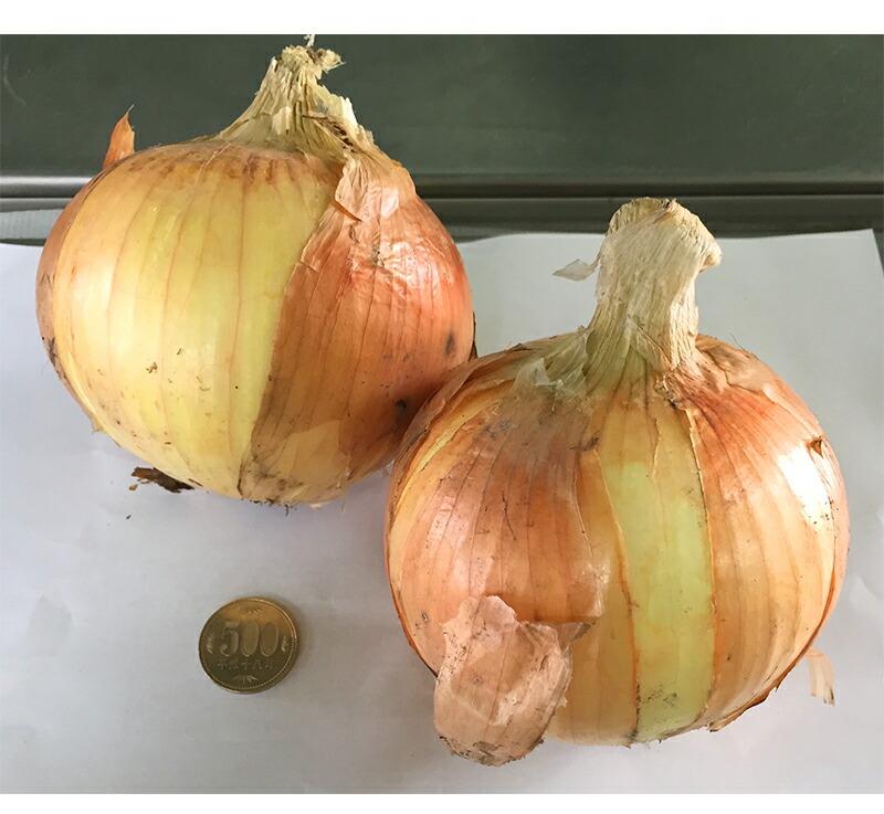 有機肥料で育った健康で安全な玉葱。和歌山県産のタマネギ