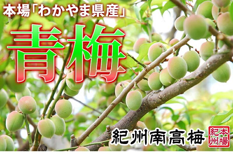 青梅は青梅でも、紀州南高青梅、和歌山県産の青梅。梅干し、梅酒用、梅シロップにも南高(なんこう)青梅は最適です。