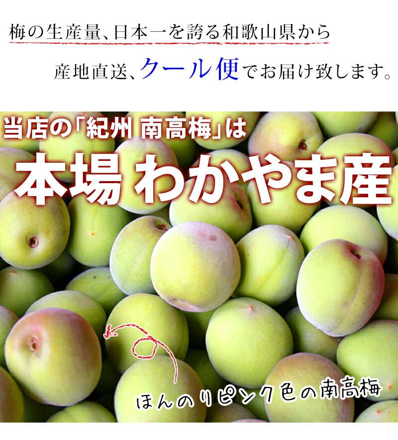 青梅の生産量は日本一、梅酒用と言えば南高青梅。わかやま県産、南高(なんこう)青梅は梅酒用に最適。ウメ