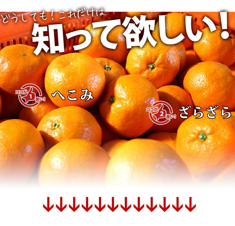 フルーツ王国、和歌山の蜜柑、柑橘の王様