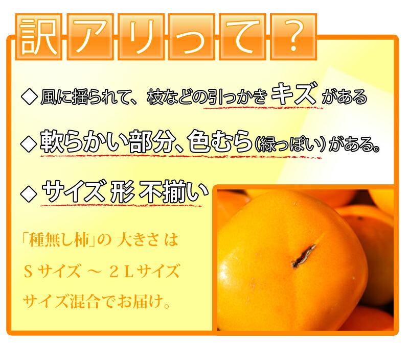 産地直送 わかやま産 タネナシ柿