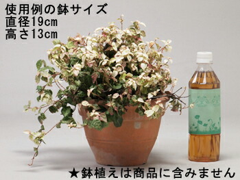 フラワースタンド使用例の鉢