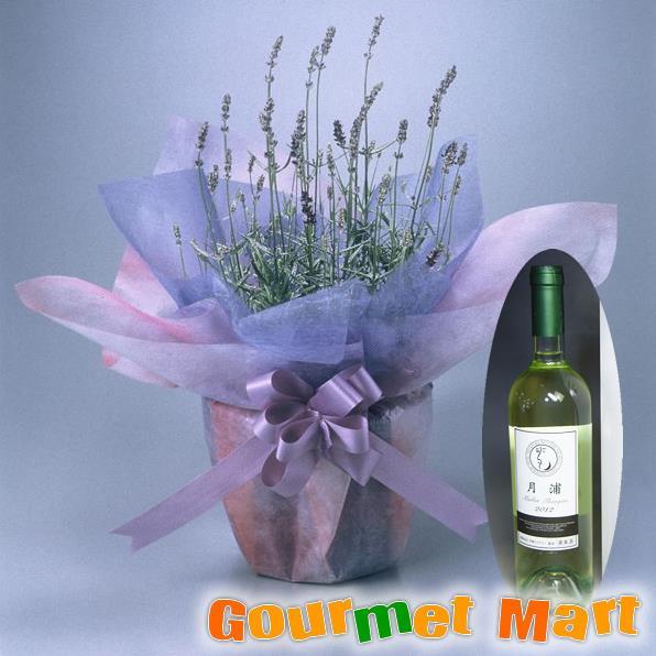 【贈り物ギフト】ラベンダー5号鉢植え(鉢花)&月浦 ドルンフェルダー750mlセットをラッピングしてお届けいたします!