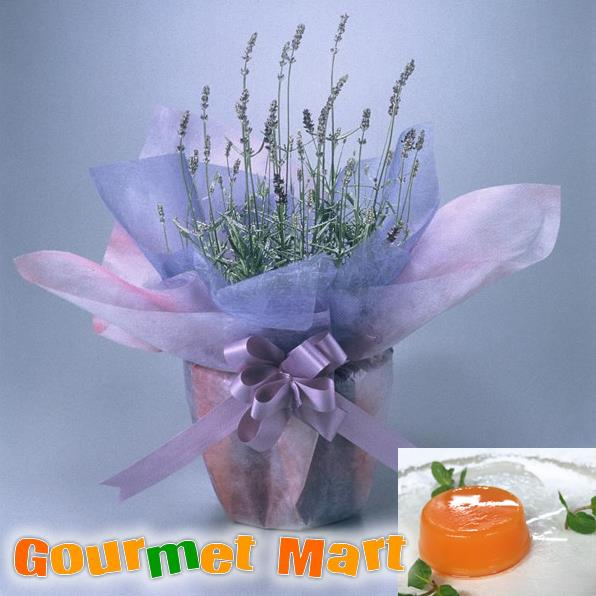 【贈り物ギフト】ラベンダー5号鉢植え(鉢花)&夕張メロンピュアゼリーをラッピングしてお届けいたします!