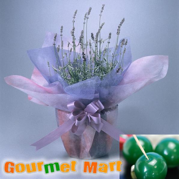 【贈り物ギフト】ラベンダー5号鉢植え(鉢花)&まりも羊羹をラッピングしてお届けいたします!