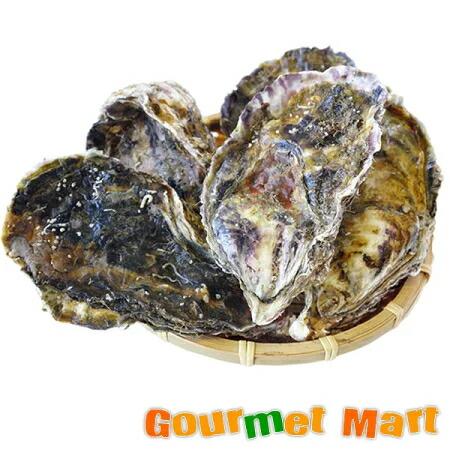 弁天かき[L(A3)サイズ]30個セット 北海道厚岸産 牡蠣 殻付き 生食 お取り寄せ