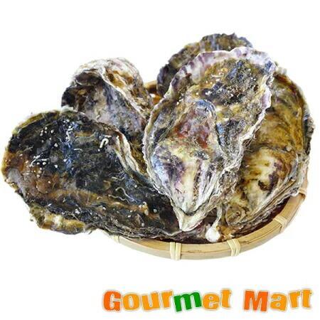弁天かき[2L(A4)サイズ]30個セット 北海道産 牡蠣 カキ 殻付き 生食 お取り寄せ ギフト 送料無料