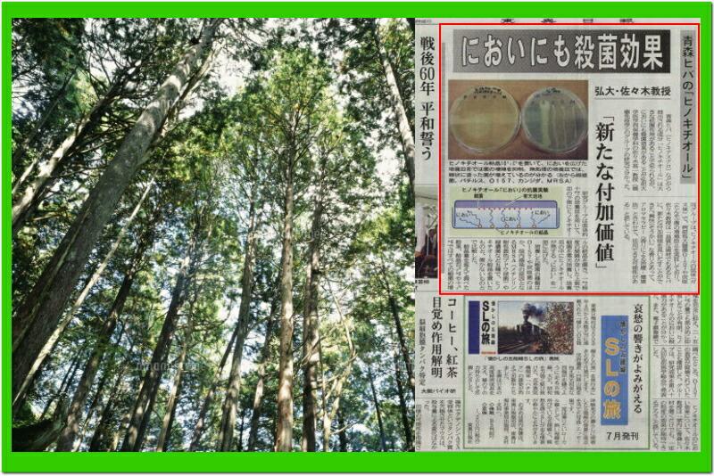 青森ヒバ 新聞記事