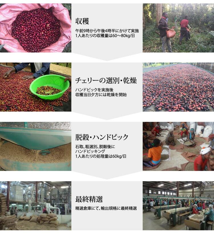 収穫から輸出まで