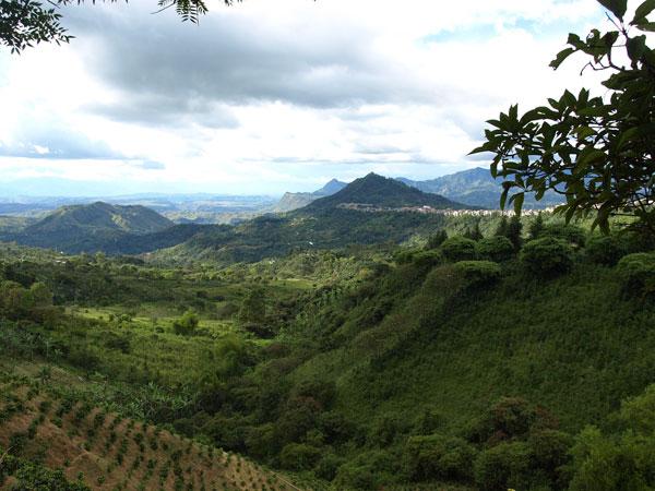 山中にある丘陵地でもコーヒー栽培は行われています