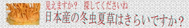 日本産の冬虫夏草・アリタリスゴールドS(Made
