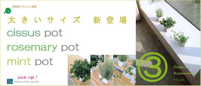 ミディアム鉢3個セット