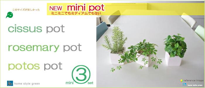 ミニ3鉢セット