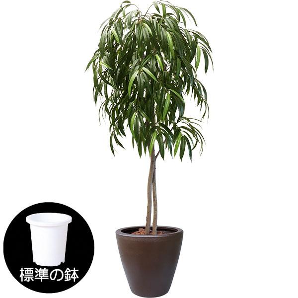 ショウナンゴム人工観葉植物