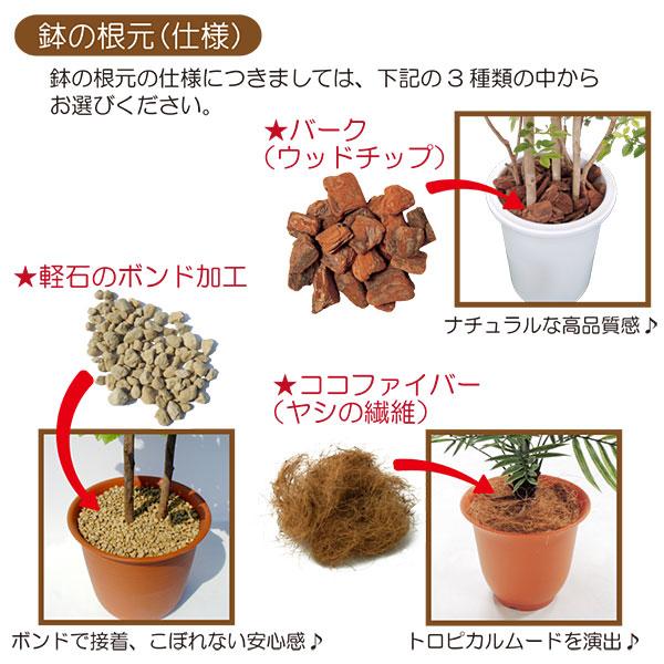 鉢の根元の仕様