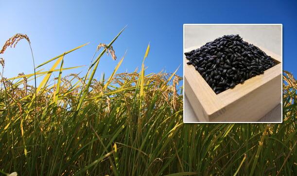 グリーンパワーなのはなのお米は、北アルプスの雪解け水『自然の恵み』が育んだおいしいお米です。
