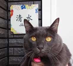 九谷焼表札