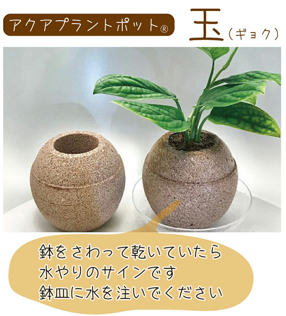 AQUA PLANT POT(アクアプラントポット)玉(ギョク)M