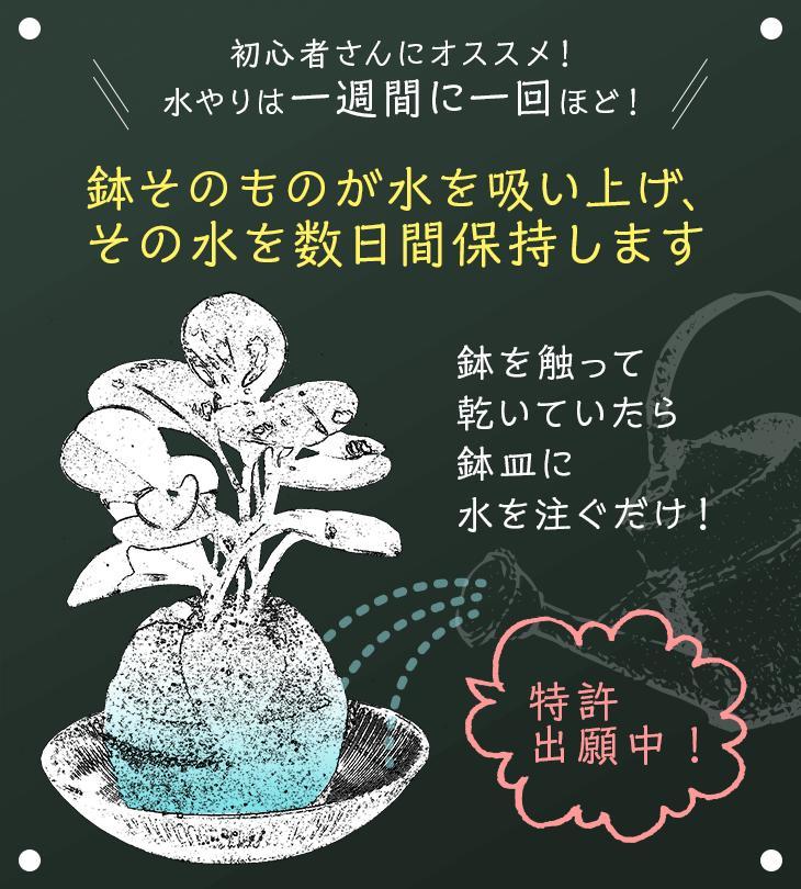 AQUA PLANT POT(アクアプラントポット)玉(ギョク)S