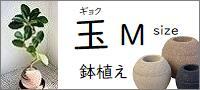 アクアプラントポット 玉(ギョク)鉢植え【M】