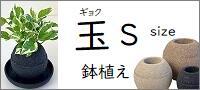 アクアプラントポット 玉(ギョク)鉢植え【S】
