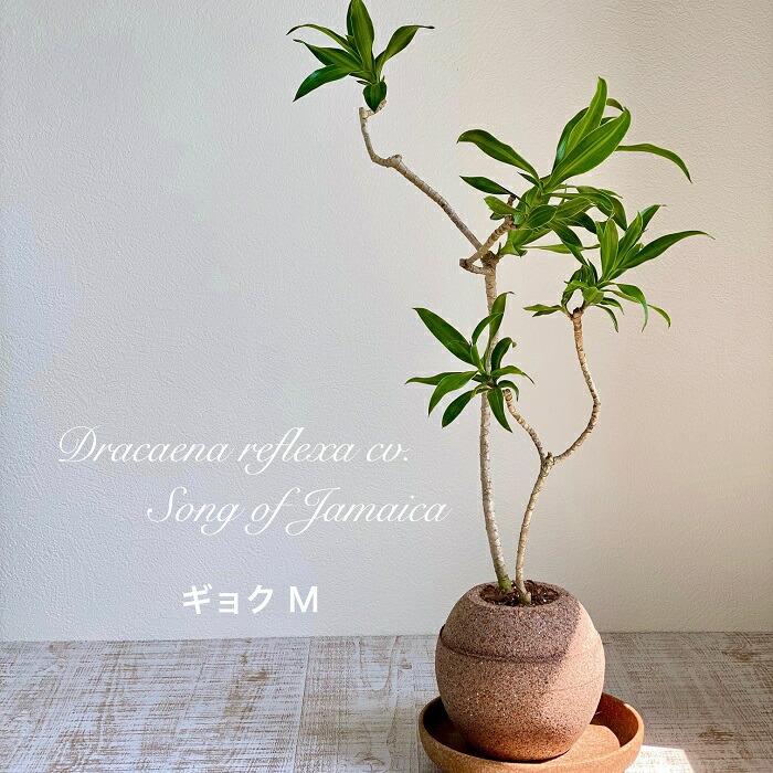 AQUA PLANT POT(アクアプラントポット)玉(ギョク)L