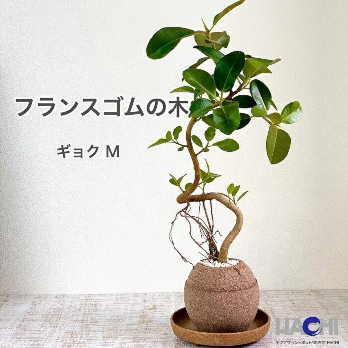 アクアプラントポット玉(ギョク)M