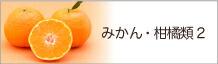みかん・柑橘類2