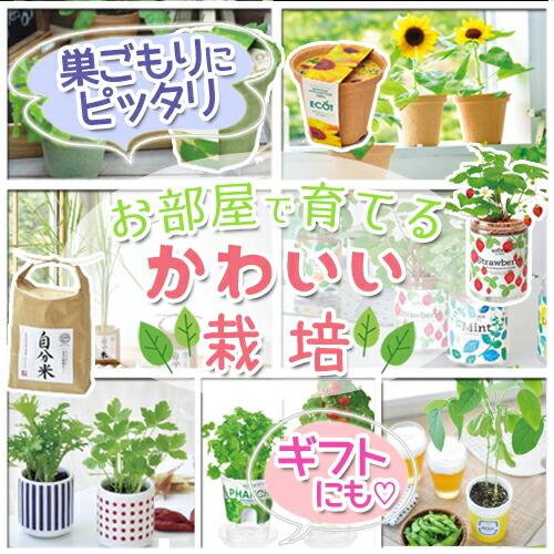 栽培 観葉植物