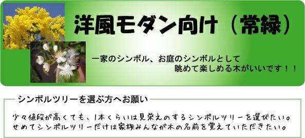 洋風モダン向け(常緑)