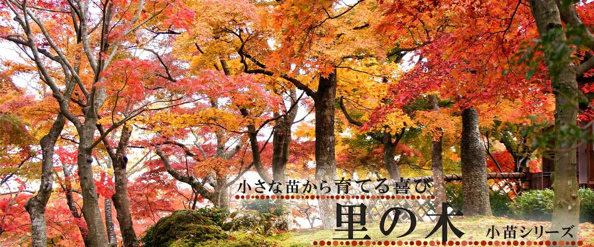 里の木シリーズ