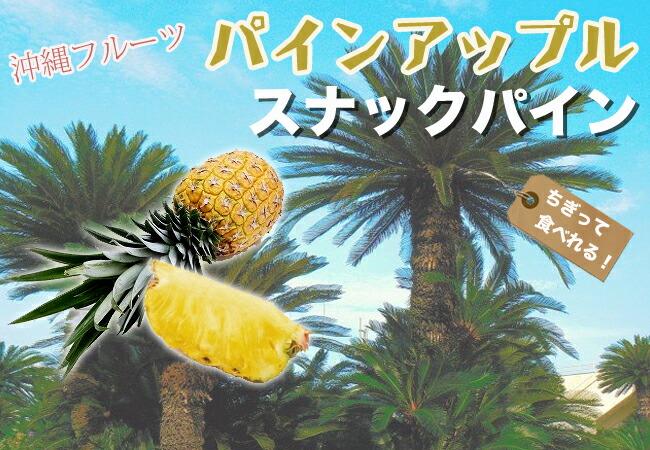 パイナップル 苗木