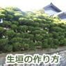 生垣の作り方