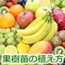 果樹苗の植え方