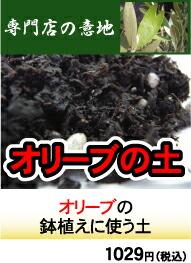 オリーブの土