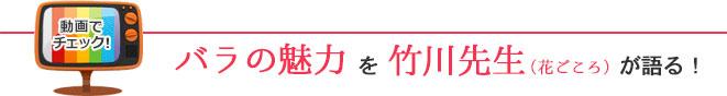 バラの魅力を竹川先生(花ごころ)が語る!