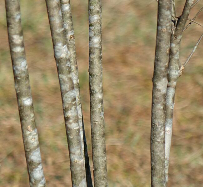 庭木 落葉樹