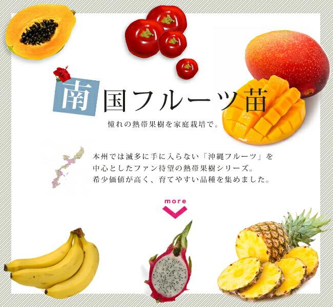 南国果樹 フルーツ 苗 販売