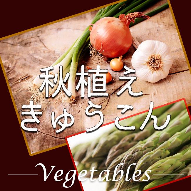 野菜 にんにく 球根 販売