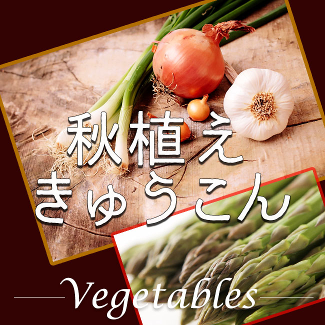 球根 野菜 秋植え 販売