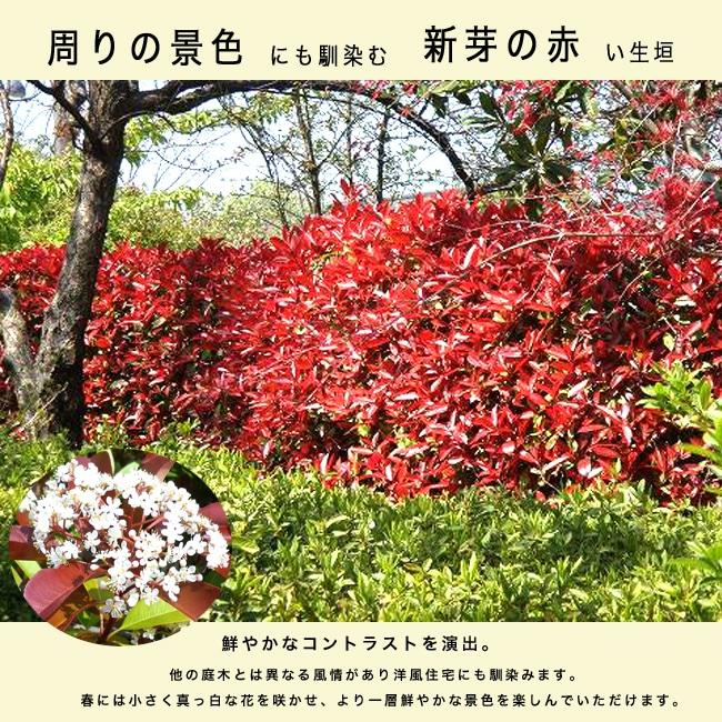 https://image.rakuten.co.jp/hana-online/cabinet/sonota3/redrobinikegaki4.jpg