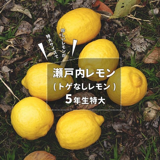 トゲなし 瀬戸内レモン|5年生